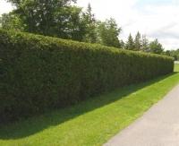 Hedge 3 S